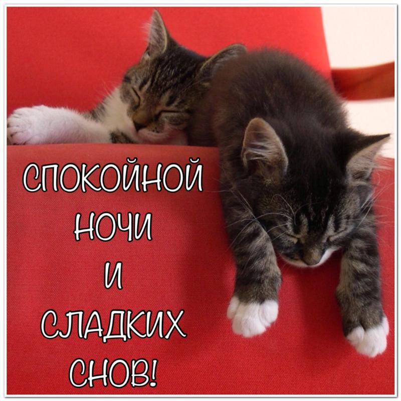 Прикольные картинки с надписью спокойной ночи сладких снов